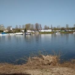Grundstück auf der Petersaue - Rheininsel zwischen Wiesbaden u. Mainz