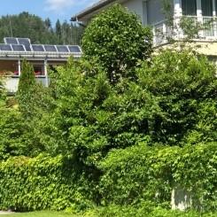 Verkaufe Luxuswohnung mit großzügigem Garten imStadtzentrum