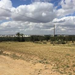 Agrarland Grundstück Hammam Sousse Tunesien