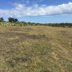 Agrarland Grundstück Kalaa Kebira Tunesien
