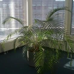 Bürofläche am Moosfeld nähe Messe Riem ICM