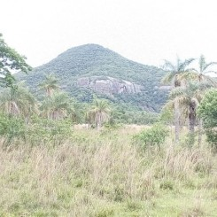 18 ha Grundstück in der Gemeinde La Colmena